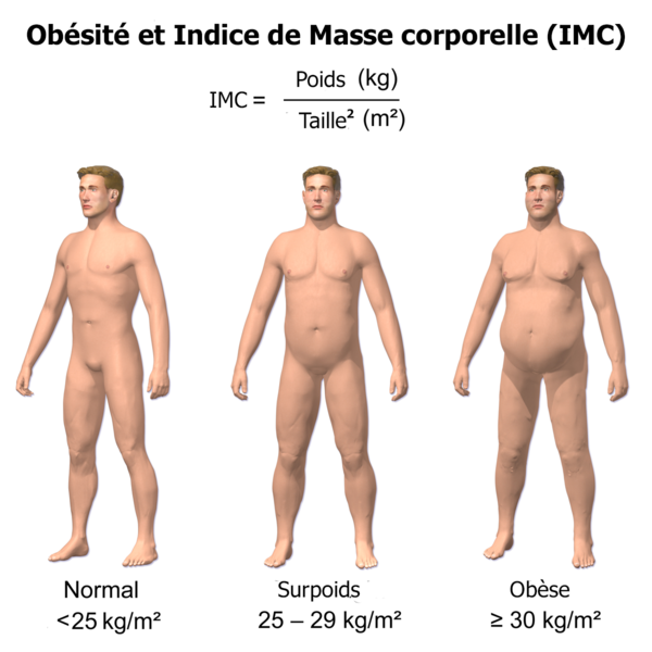 indice de masse corporel